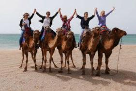 Camels Tanger
