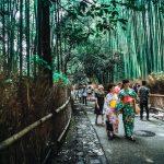 Japan Bamboo Trees