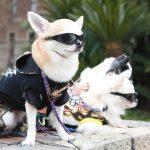 Japan Puppy Dog Model