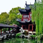 Shanghai Tree-water-nature-flower-pond